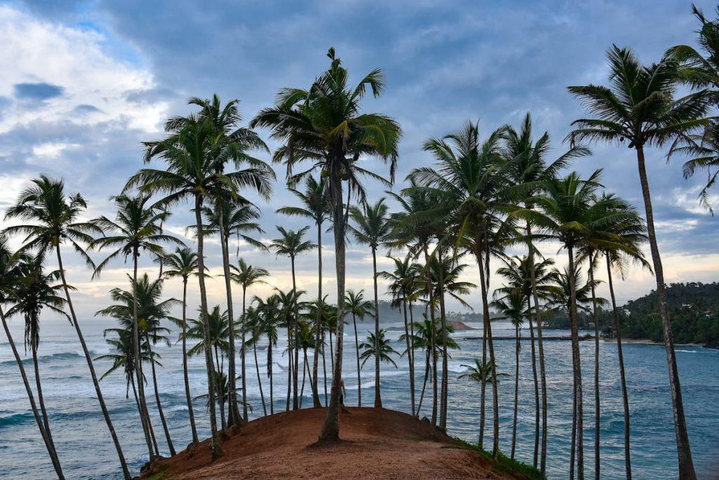 coconut tree hill à mirissa