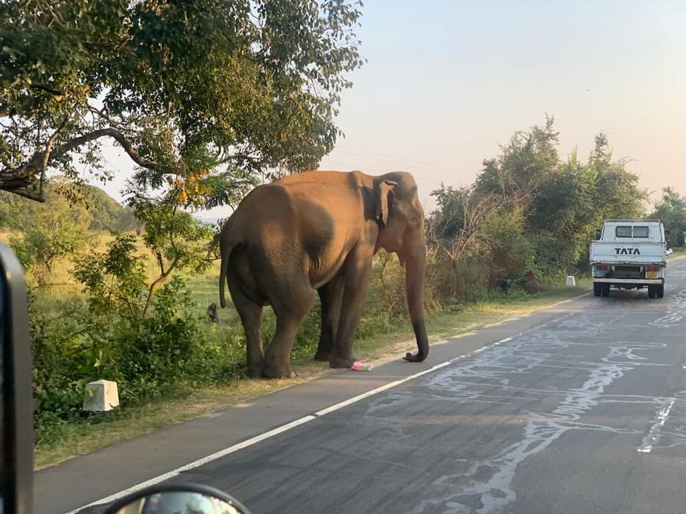 éléphant sur la route