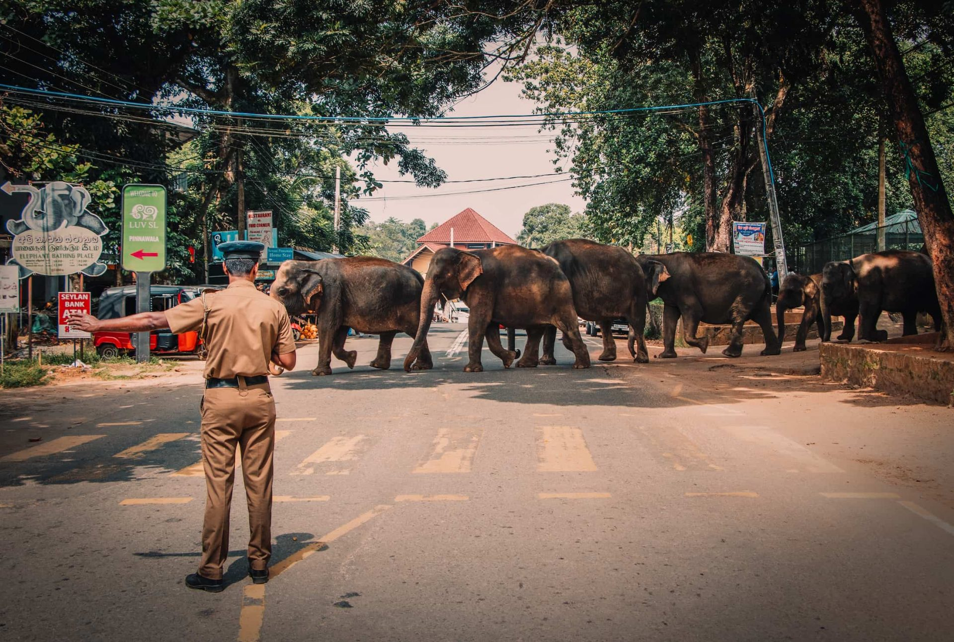 elephant traverse la route