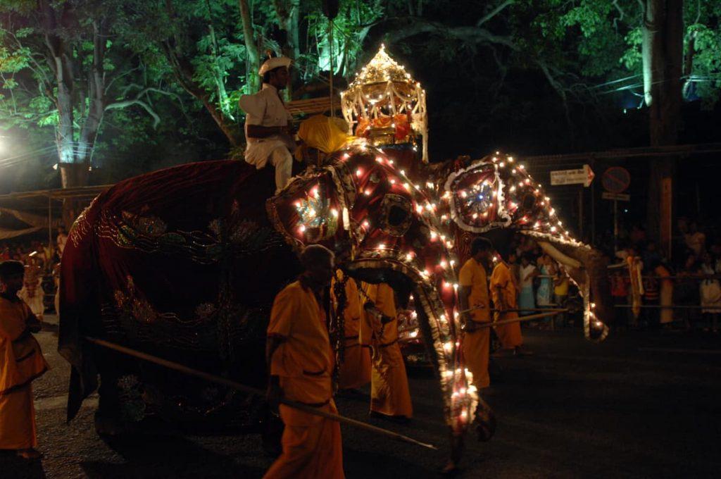 kandy perahera elephant