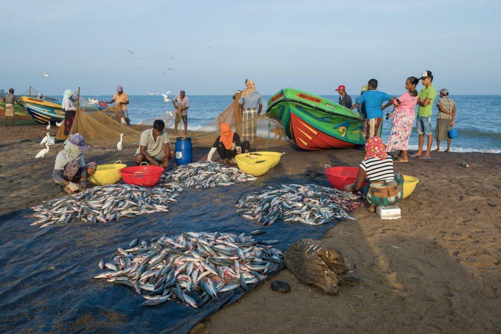 Pecheurs à Negombo, sri lanka