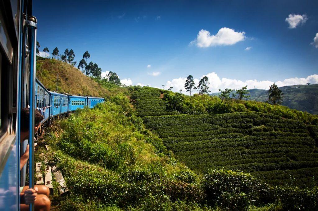 train au sri lanka plantation de thé
