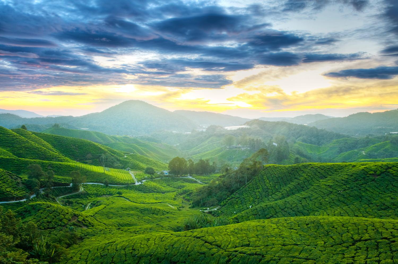 plantation thé sri lanka