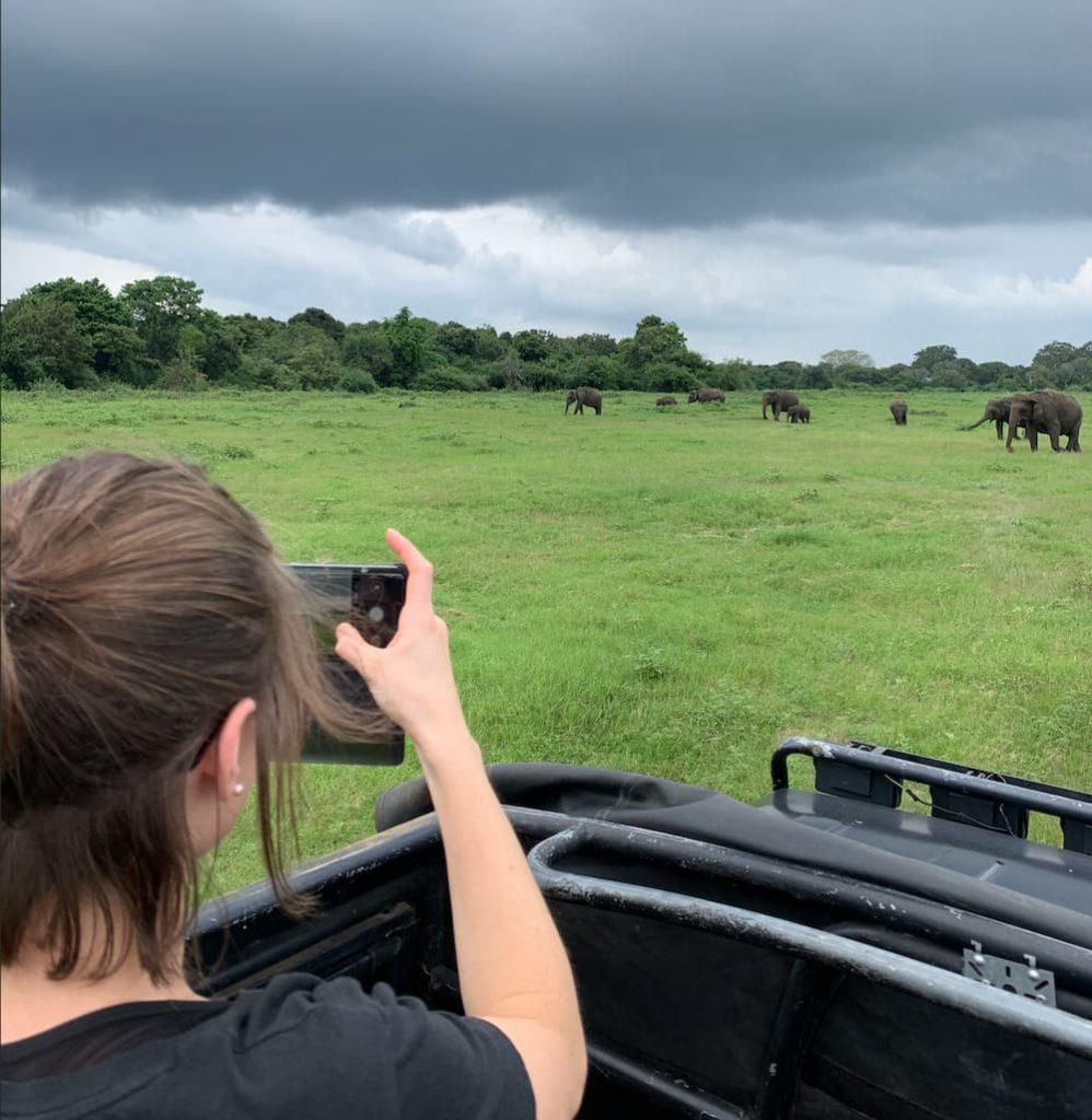 safari avec des éléphants